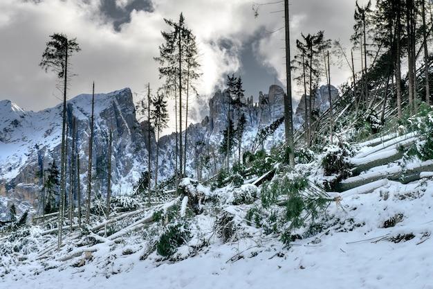 Uma colina com muitas árvores sem folhas cercada por altas montanhas rochosas cobertas de neve nas dolomitas