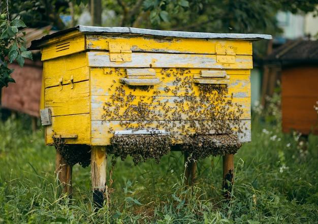 Uma colméia de madeira cheia de abelhas no apiário