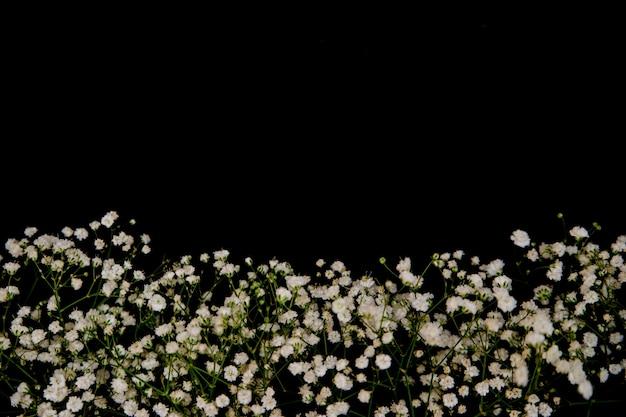 Uma composição romântica de flores. flores de gipsófila branca sobre um fundo preto. dia dos namorados, páscoa, aniversário, feliz dia da mulher, exibição de dia das mães.