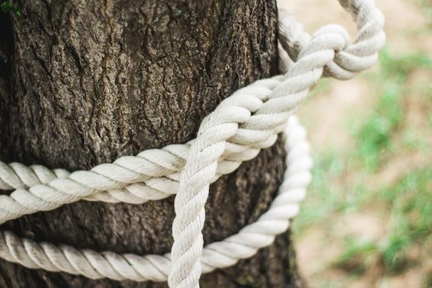 Uma corda com um nó ao redor do tronco da árvore. nós da corda alpina no campo de treinos.