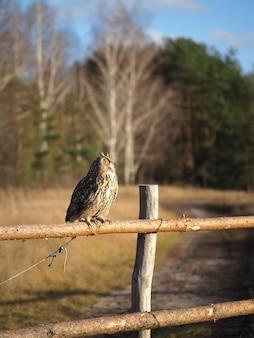 Uma coruja sentada em uma cerca de madeira em um campo