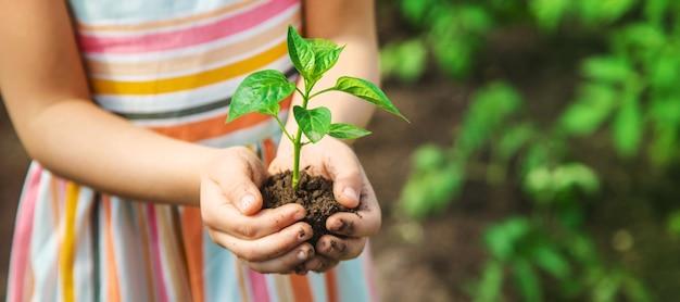 Uma criança com mudas nas mãos no jardim