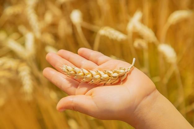 Uma criança em um campo de trigo.