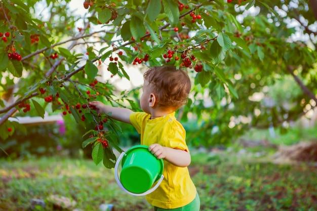 Uma criança em uma camiseta amarela brilhante coleta cerejas em um jardim