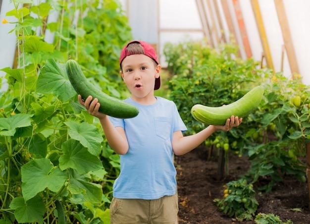 Uma criança na perplexidade que prende uns grandes pepinos gigantes na estufa.