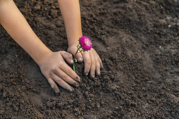 Uma criança no jardim planta uma flor.