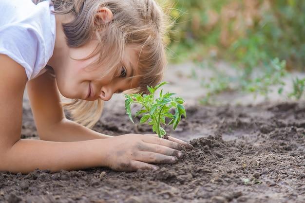 Uma criança no jardim planta uma planta.