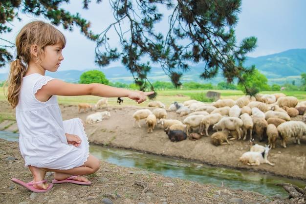 Uma criança olha para um rebanho de ovelhas. viajar na geórgia.