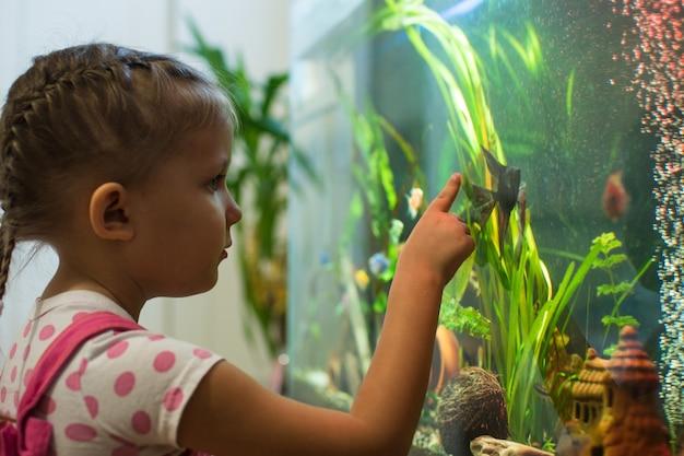 Uma criança pequena olha para o peixe-anjo no aquário