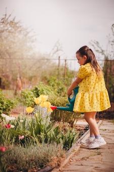 Uma criança rega tulipas amarelas de um regador, uma criança rega flores de verão e cuida do ...