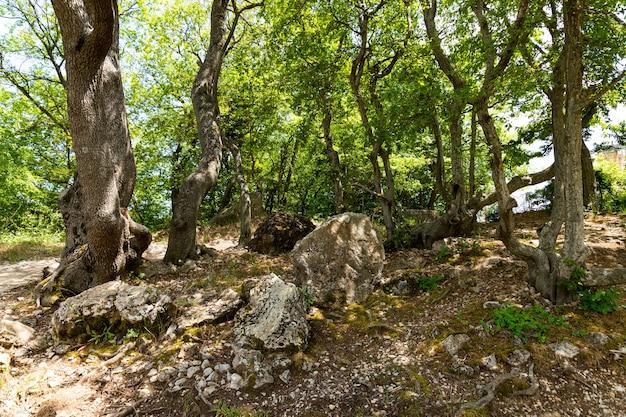 Uma densa floresta montanhosa verde com grandes pedras de calcário cinza.