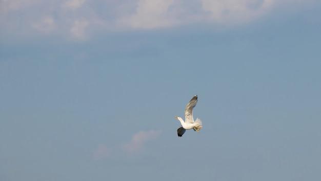 Uma direção de mudança de gaivota