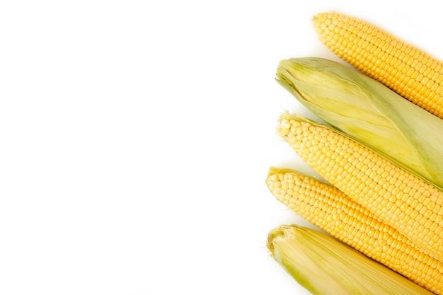Uma espiga de milho isolada em um fundo branco. vista do topo