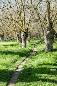 Uma estrada através de uma pequena floresta verde solitária