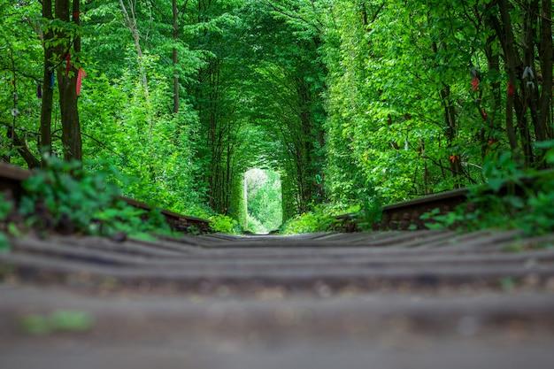 Uma estrada de ferro na primavera floresta túnel do amor