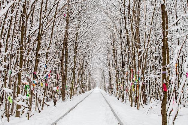 Uma estrada de ferro no túnel da floresta de inverno do amor