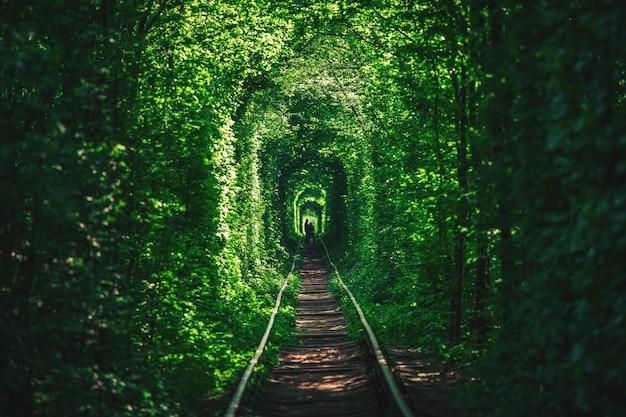 Uma estrada de ferro no túnel de floresta de primavera do amor