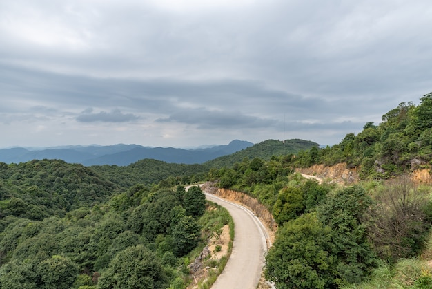 Uma estrada de terra leva à floresta verde