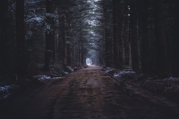 Uma estrada estreita e lamacenta em uma floresta escura