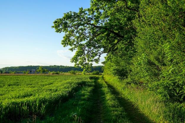 Uma estrada rural com grama verde perto de uma floresta verde e um campo de trigo