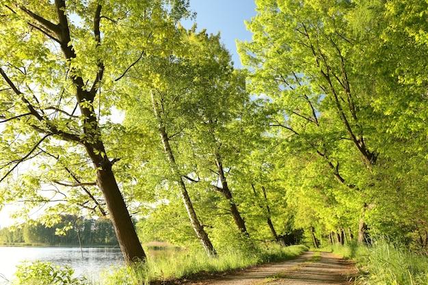 Uma estrada rural entre carvalhos em uma manhã ensolarada de primavera