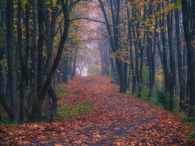 Uma estrada sinuosa através da floresta nublada de outono pela manhã.
