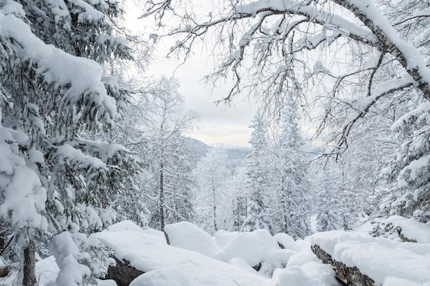 Uma fabulosa floresta de inverno coberta de neve fofa, deriva após uma nevasca, montanhas em perspectiva.