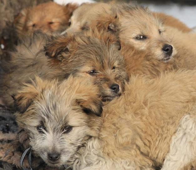 Uma família de cães vadios na rua