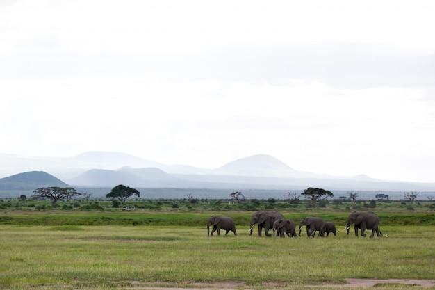 Uma família de elefantes está andando no parque nacional