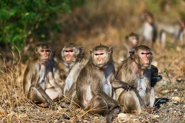 Uma família de macacos selvagens sentados juntos no inverno na tailândia