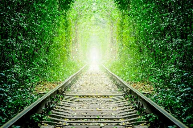 Uma ferrovia na floresta de primavera