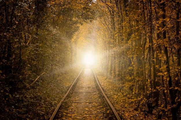 Uma ferrovia na floresta
