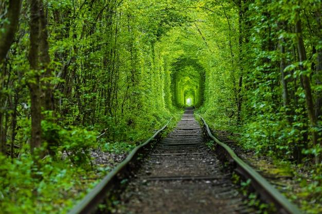 Uma ferrovia no túnel da floresta da primavera do amor