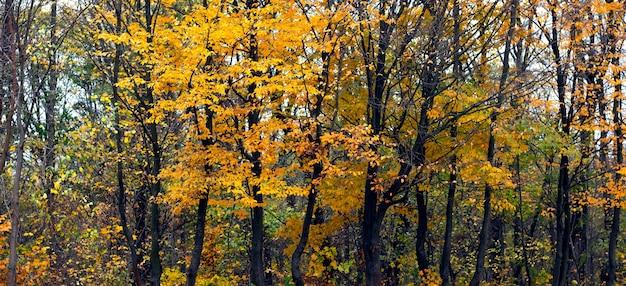 Uma fileira de cervos com folhas amarelas na floresta de outono