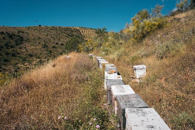 Uma fileira de colmeias de abelhas em um campo de flores na montanha. conceito de apicultura.