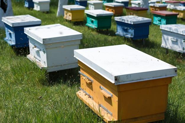 Uma fileira de colmeias em um apiário privado no jardim. indústria do mel.