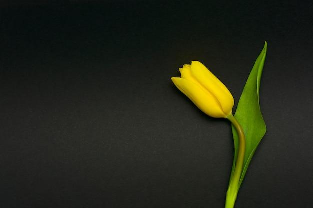Uma flor de tulipa em um fundo preto. um cartão de condolências.