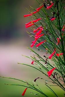 Uma flor em um fundo de naturezas naturais florescendo no reflexo da luz natural