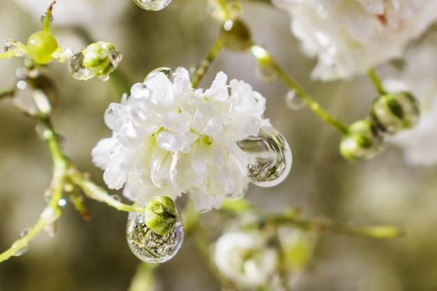 Uma flor pequena do close up branco do gypsophila nas gotas da água.