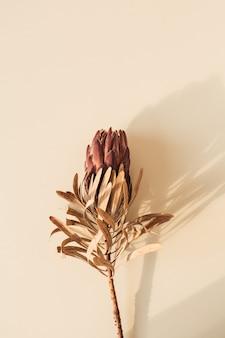 Uma flor protea vermelha seca em superfície bege pastel