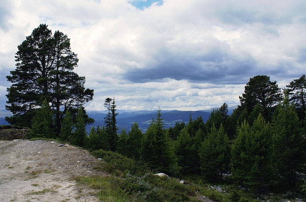Uma floresta com muitas árvores verdes cercada por altas montanhas sob um céu nublado na noruega