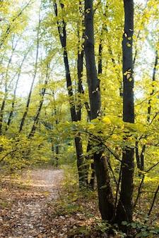 Uma floresta com um caminho por entre árvores e arbustos verdes, folhas caídas no chão, chisinau, moldávia