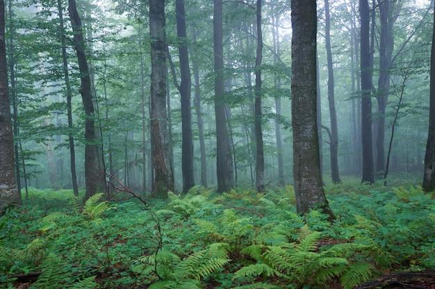 Uma floresta exuberante, onírica, com muitas samambaias e nevoeiro matinal