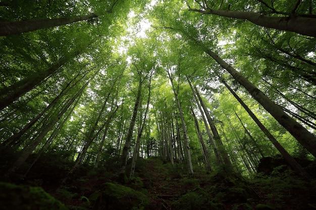 Uma floresta tropical. musgo verde em árvores e pedras