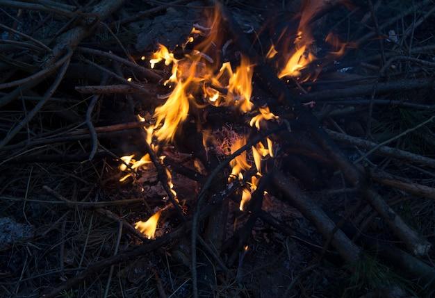 Uma fogueira com chamas nos galhos arde brilhantemente na floresta.