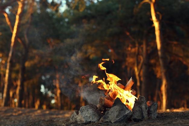 Uma fogueira em uma floresta de pinheiros.