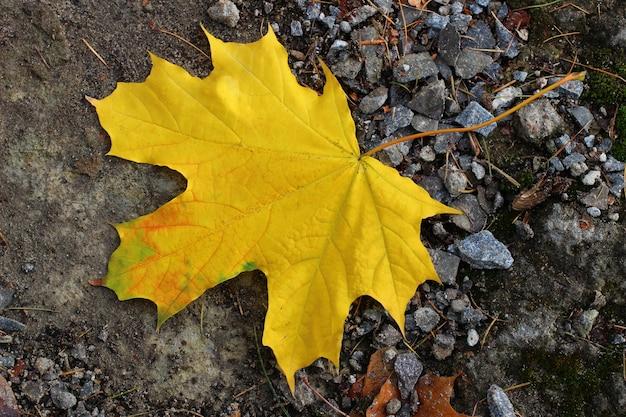 Uma folha amarela no chão