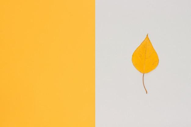 Uma folha de bétula amarela outono em cinza - amarelo com espaço de cópia