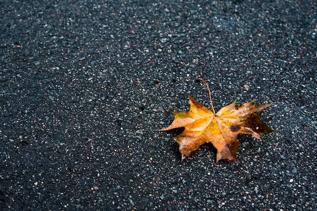 Uma folha de bordo molhada encontra-se no asfalto.