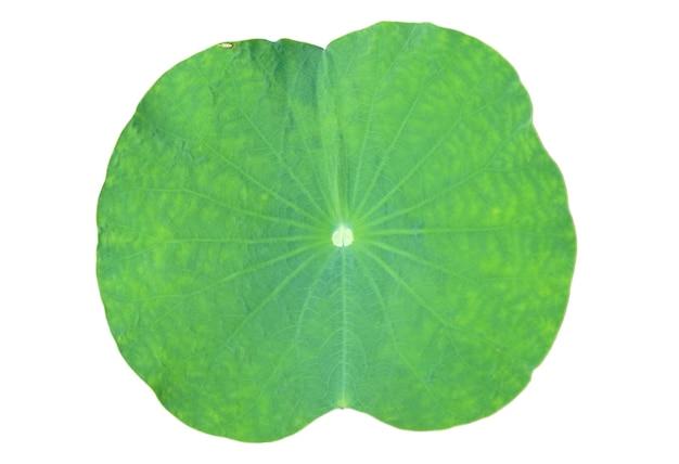 Uma folha de lótus em fundo branco